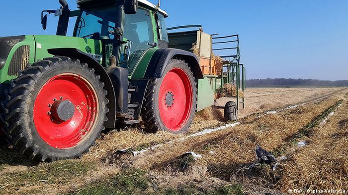 En Arzdorf, a 10 kilómetros de Bonn, los campesinos han comenzado a ahogar sus cultivos de fresas porque debido a que los recolectores de Europa del este no podrán entrar a Alemania, sus cosechas se van a perder.