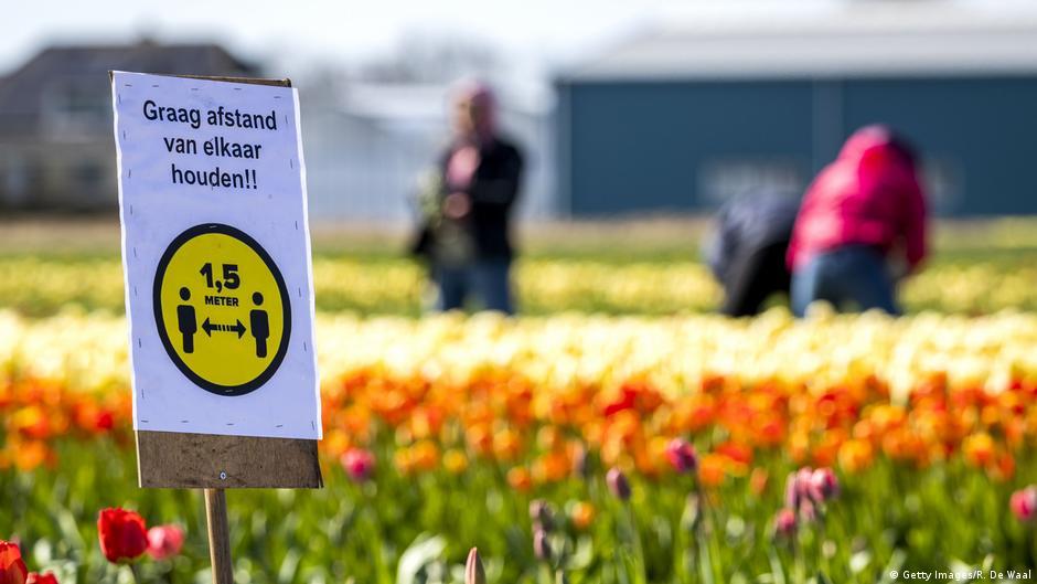 Blumenhandel Niederlande Coronavirus