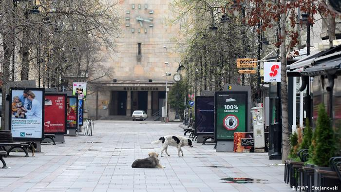 Deserted streets in Skopje, the capital of North Macedonia — only stray dogs are left