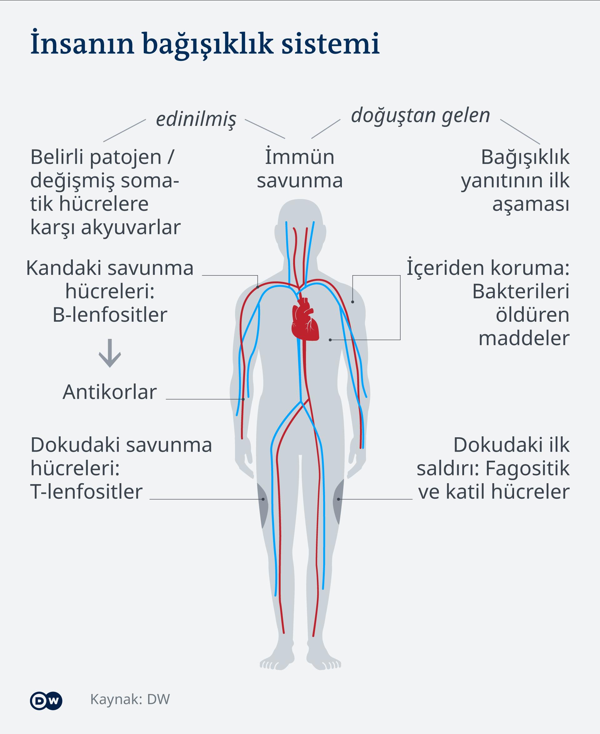 Infografik Abwehrsystem des Menschen TR