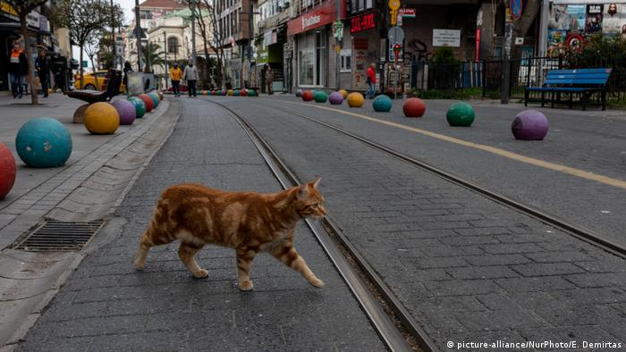 A cat crosses an empty street in downtown Istanbul