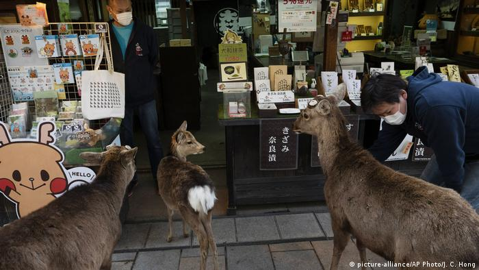 Several deer explore the outdoor stands at a souvenir shop in Nara, Japan