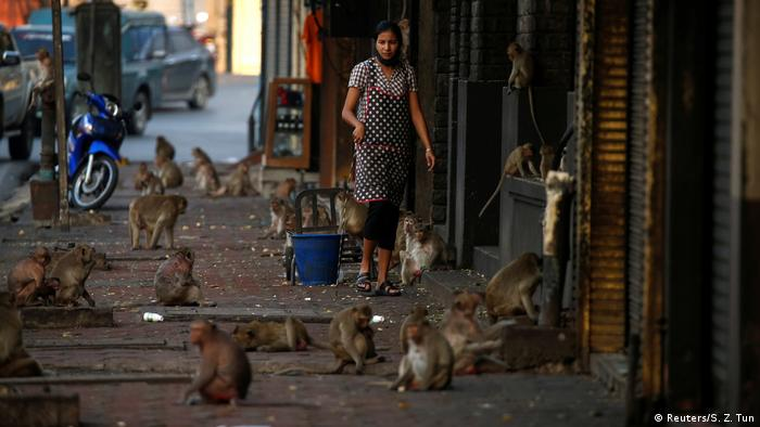A woman watches monkeys as they search of food in front of her shop in Lopburi, Thailand.