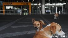 Indien Streunende Hunde versammeln sich vor dem verlassenen internationalen Flughafen Netaji Subhash Chandra Bose