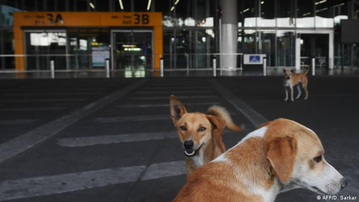Stray dogs gather outside the deserted Netaji Subhash Chandra Bose International Airport in Kolkata.