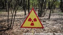 Ukraine - Wald in der nähe von Tschernobyl