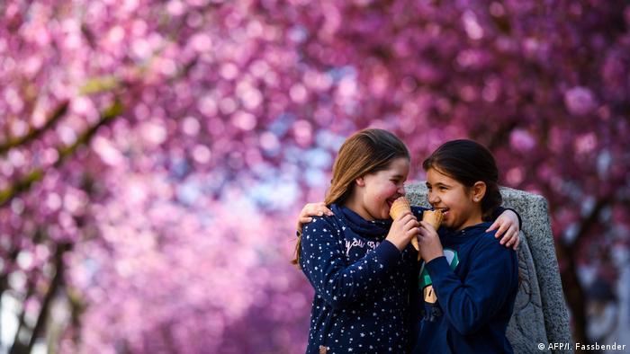 Bild des Tages: Pilgerstätte der Kirschblütenanbeter