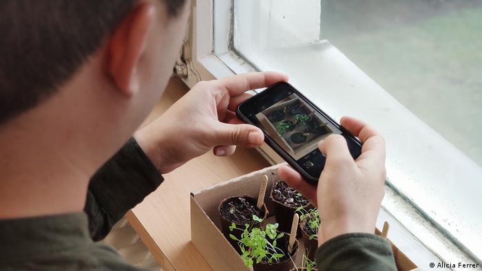 Growing plants on a windowsill