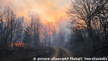 Ukraine Tschernobyl Waldbrand Radioaktivität