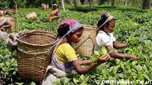 TEA GARDEN WORKERS IN A TEA ESTATE OF ASSAM