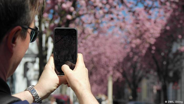 A man takes a smartphone photo of cherry blossoms in Bonn (Foto: DW/Laura Döing)
