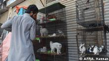 Pakistan Karachi Haustiere von Lockdown bedroht