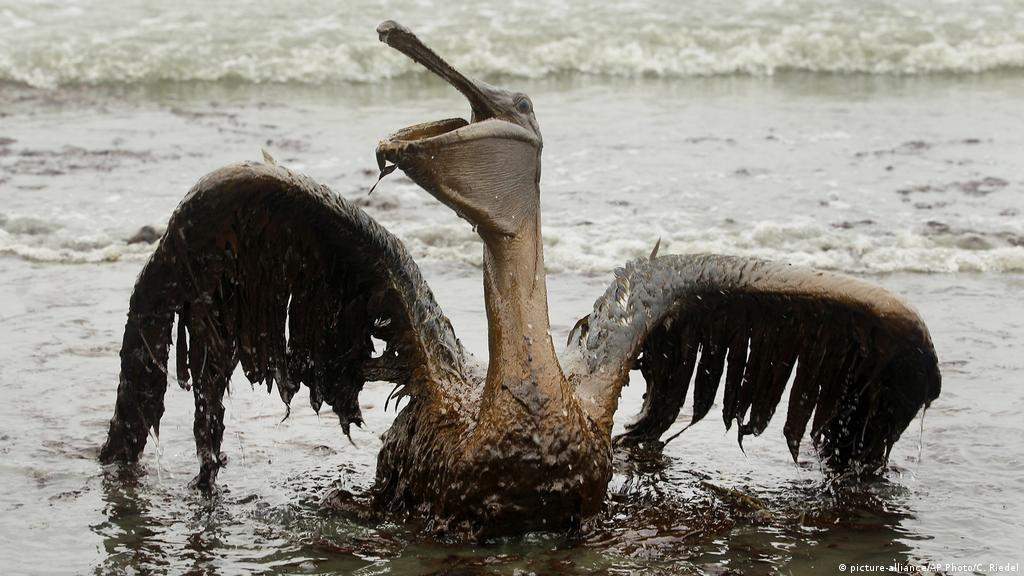 Derrames de petróleo en América Latina: el Golfo de México solo fue el  comienzo | Las noticias y análisis más importantes en América Latina | DW |  07.05.2020