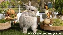Symbolbild Ostern Kaninchen mit Mundschutz