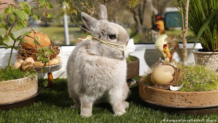 Bunny wearing face masks (picture-alliance/Geisler/T. Skupin)
