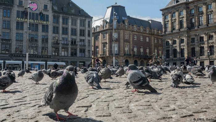 Pigeons on Amsterdam's Dam Square