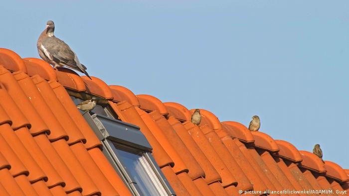 Eine Taube sitzt auf einem rotem Dach (Foto: picture-alliance)
