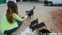 Food for the dogs Description: students feed the dogs in around seven to eight places on the Dhaka University campus Tag: coronavirus, dhaka, Bangladesh, Dhaka University campus, dog, food, Copyright: bdnews24.com