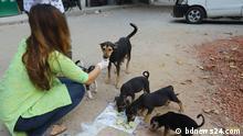 Bangladesch Dhaka Universität Studenten füttern Hunde
