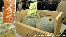 24.05.2019, Japan: ©Kyodo/MAXPPP - 24/05/2019 ; A pair of melons produced in Yubari, Hokkaido, northern Japan, fetches a record price of 5 million yen ($45,500) in the season's first auction in Sapporo on May 24, 2019. (Kyodo) ==Kyodo Foto: MAXPPP |