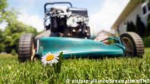 Symbolbild: Ein Rasenmäher steht auf kurz geschnittenem Gras. Im Vordergrund ragt eine kleine Margarite in die Luft