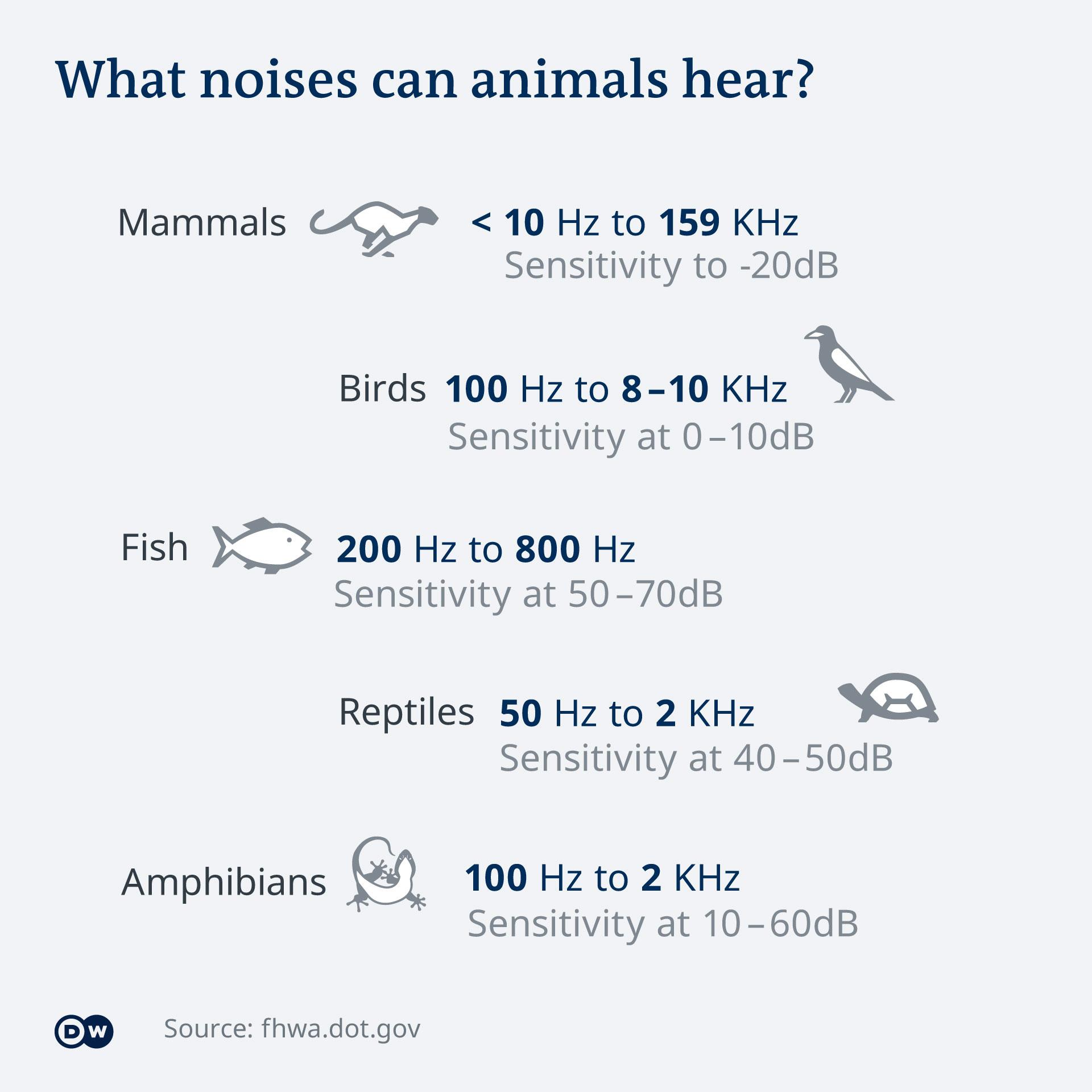 noise sensitivity in animals