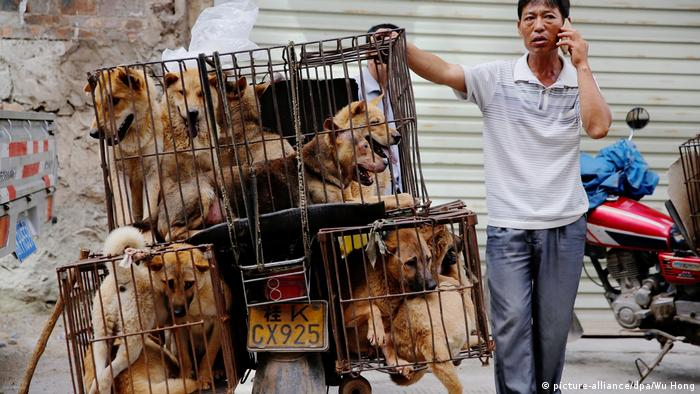 Chinese man selling dogs in cages