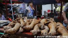 ARCHIV- Hundefleisch wird am 21.06.2016 auf dem Hundefleisch-Festival in Yulin, Guangxi, China angeboten. Im Kampf gegen das umstrittene Hundefleisch-Festival in China haben Tierschützer erreicht, dass die Stadt Yulin Restaurants, Straßenständen und Markthändler in diesem Jahr verbieten wird, Hundefleisch während des Festes zu verkaufen. (zu dpa Aktivisten: China verbietet Hundefleisch-Verkauf auf Festival vom 18.05.2017) Foto: Wu Hong/EPA/dpa +++(c) dpa - Bildfunk+++ |