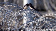 Zwei Vögel sitzen am frühen Donnerstagmorgen (07.06.2007) auf dem mit Stacheldraht versehenen Sicherheitszaun vor Heiligendamm. In Heiligendamm treffen sich bis zum 08.06.2007 unter höchsten Sicherheitsvorkehrungen die Regierungschefs der G8-Staaten. Foto: Kay Nietfeld dpa +++(c) dpa - Report+++ | Verwendung weltweit