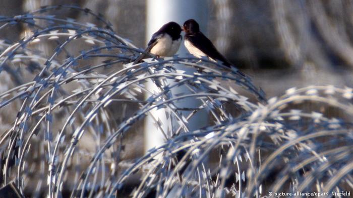 Deutschland Heiligendamm Vögel auf Stacheldrahtzaun