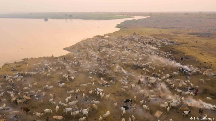 An aerial image of cows grazing alongside a river