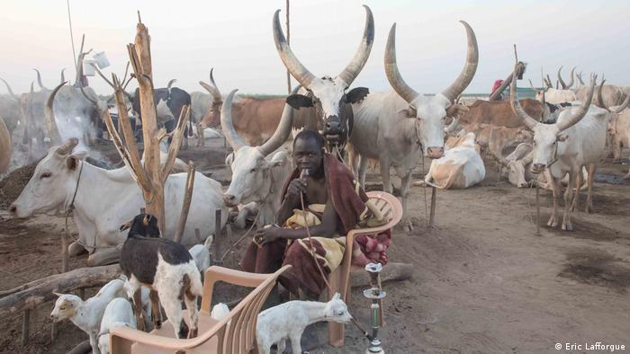 A member of the Mundari tribe sits in a chair and smokes shisha, surrounded by cattle and goats.