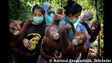 ++++ ACHTUNG: SPERRFRIST BIS 16.04., 22.00 UHR ++++ Kategorie Natur Saving Orangutans 103_Alain Schroeder_for National Geographic