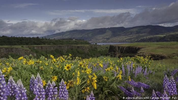 A valley with flower meadows and a lake and hills in the background; USA; Columbia River Gorge (picture-alliance/All Canada Photos/F. Pali)