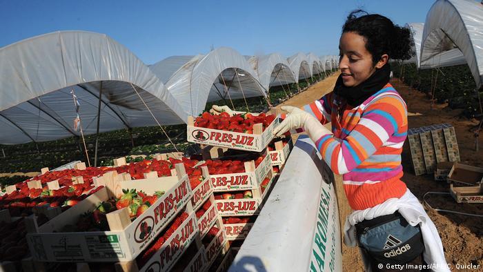 Spanien Arbeitsmigration Europa Afrikanische Arbeiterin bei Erdbeerernte