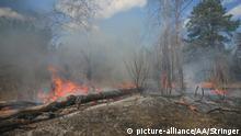 Ukraine | Waldbrände in Ragovka