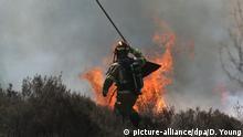 Niederlande Waldbrand im deutsch-niederländischen Grenzgebiet