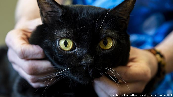 Two cats in New York are the first pets to test positive for the novel coronavirus in the United States