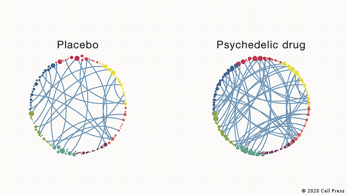 The spheres show connectivity inside a human brain. Under the influence of a psychedelic drug like psilocybin, global connectivity increases: more and more neurons interact with each other. These neurons may not have been interacting before because the mind was in a rut or fixed pattern of thinking. Psychedelics add flexibility. (Nutt et al. 2020; Cell Press)