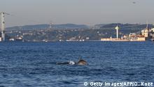 Türkei Istanbul | Coronavirus | Bosporus, Delfine