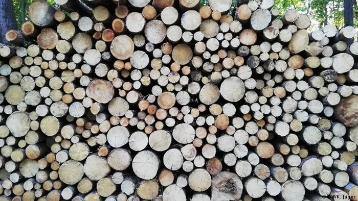Germania se confruntă în prezent cu o penurie de material lemnos