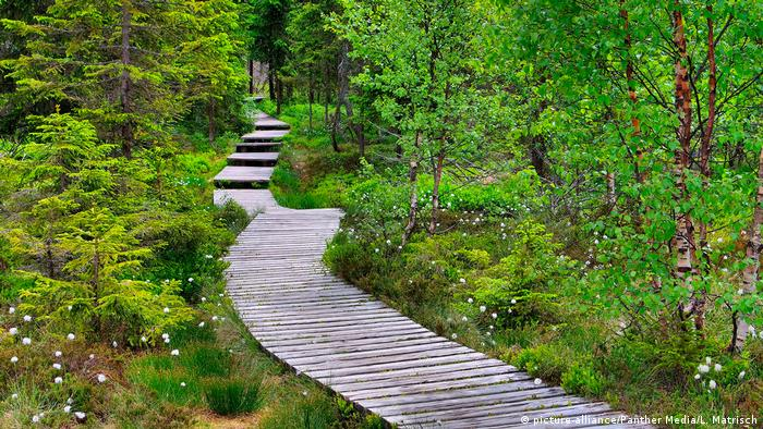 A wooden walkway through moorland in Lower Saxony, Germany