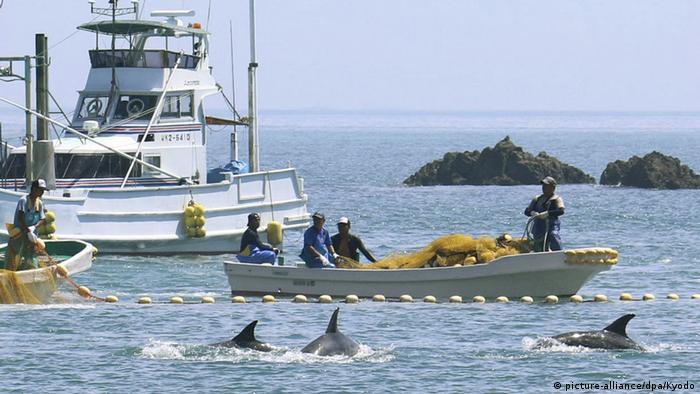 Fishermen catching whales