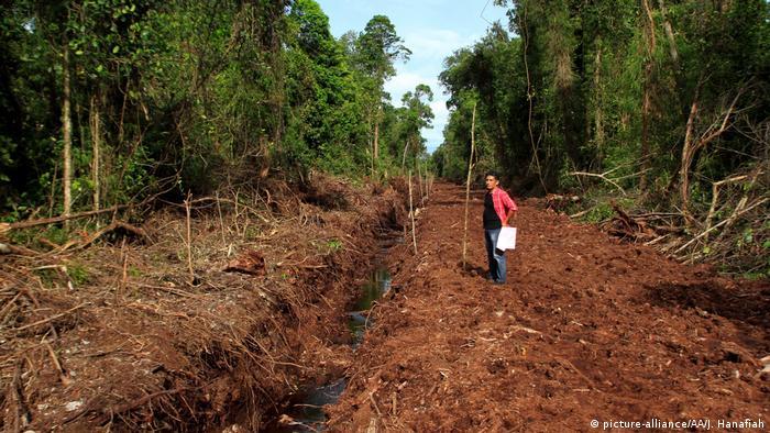 Indonesien Protest Leuser Ecosystem in Aceh (picture-alliance/AA/J. Hanafiah)