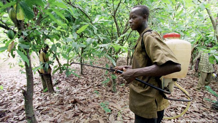 Plantaža u Obali Slonovače