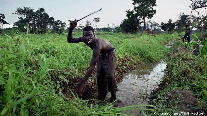 Elfenbeinküste   Fousseney Cisse (15) aus Mali arbeitet auf einer Kakaoplantage