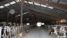 Kroatien | Milchfarm in Velika Kopanica
