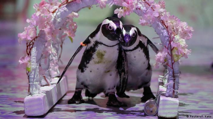 BdTD - Japan Online Tiershow während Coronakrise (Reuters/I. Kato)