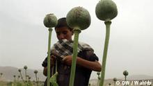 Learning by Ear – LbE – Afghanistan – Drogen und Ihre Konsequenzen 2
