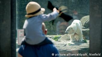 Отец с ребенком смотрит на белого медведя